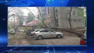 В Башкирии сильный ветер повалил деревья и фонарные столбы