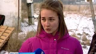 Коневладельцы и ветеринары оценили состояние замученных в Гурьевском районе лошадей