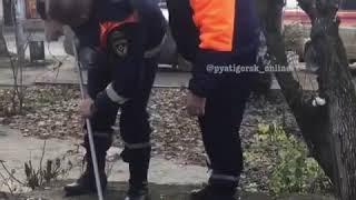 Спасатели вытащили собаку из открытого люка в Пятигорске