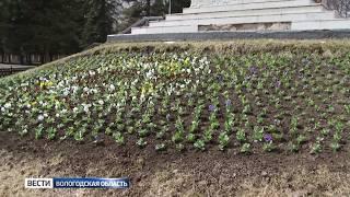 В Вологде начали высаживать цветы возле памятников
