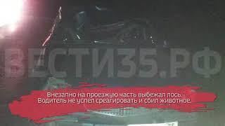 «Волга» сбила лося под Вологдой: животное погибло на месте