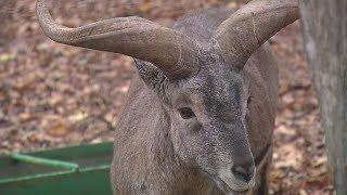 Ставропольскому зоопарку подарили новых животных