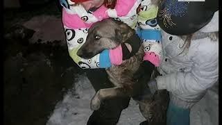 Спасли собаку