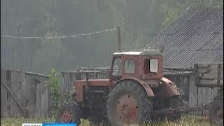 В Емельяновском районе объявлен карантин по бешенству