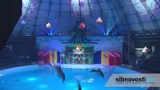 Новосибирский дельфинарий новая программа