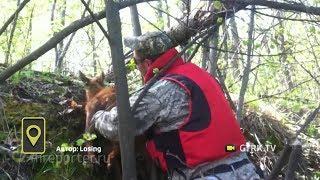В лесах Башкирии туристы спасли лосёнка