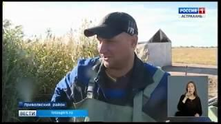 В Астрахани стартовала малая прудовая путина