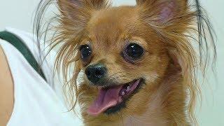 Волгоградцев призывают вакцинировать домашних животных от бешенства
