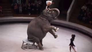 Слоны в воронежском цирке