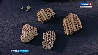 Стали известны подробности об археологической находке студентов ПетрГУ