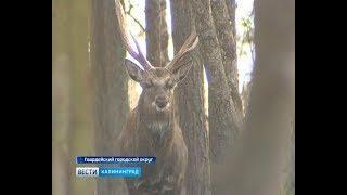 В лесах Калининградской областиначалась перепись обитателей