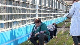 Тепличная арифметика: в Краснодаре начались испытания озимых сортов пшеницы