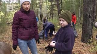 Курганские власти очистили придорожный лес от мусора
