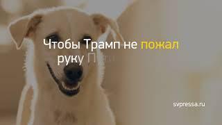 """Заголовок дня: """"Мульки про Орлову, бизнес её сына и вообще..."""" и другие важные новости за 2018-12-09"""