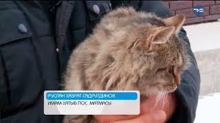 Тюмень кошачья - «Утро с Вами» 01.03.2018