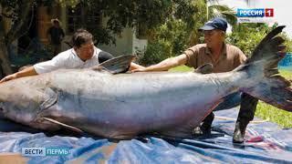 Сматывайте удочки: Рыбаков Прикамья огорошили новыми ограничениями