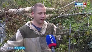 Уборкой на Ильинском кладбище занимался сегодня десант Архангельской колонии