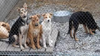 В Саратове перестали ловить собак