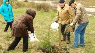 Депутаты и ветераны высадили 75 саженцев ели и кедра