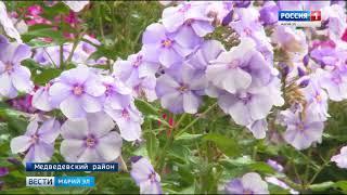 Любовь на всю жизнь: цветовод из Марий Эл отдает предпочтение флоксам - Вести Марий Эл