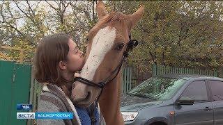 Башкирская девушка спасла жеребца от гибели, выкупив его со скотобойни