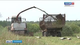Смоленские аграрии отчитались о предварительных успехах в заготовке кормов