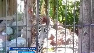 В Калининградском зоопарке животным теперь нужно добывать обед самостоятельно