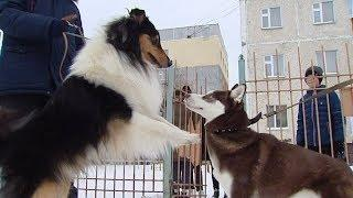 Нижневартовские школьники построили площадку для выгула собак