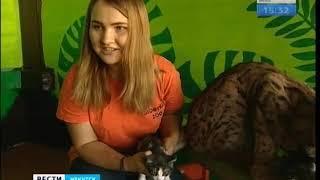 Рысь Алёна воспитывает котят в зоопарке в Иркутске