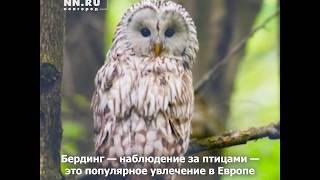 «Они как котики, только летают». Где наблюдать за птицами?