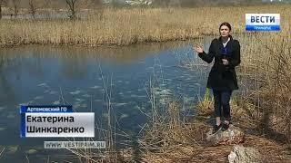 Мертвая вода: река под Артемом превратилась в свалку биоотходов