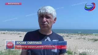 Побережье Каспийского моря в Редукторном поселке очистили от мусора