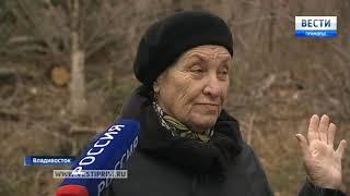 В пригороде Владивостока черные лесорубы уничтожат хвойные деревья