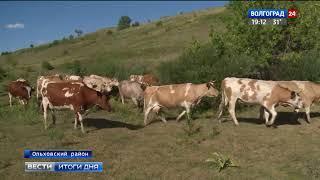 В Волгоградской области региональные гранты способствуют развитию молочных ферм