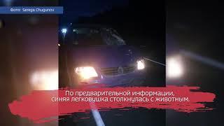 Автомобиль сбил лося на трассе Вологда — Новая Ладога