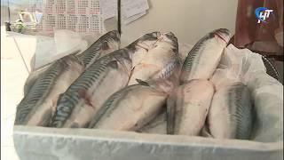 В Новгородской области началась облава на рыбных браконьеров