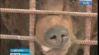 Шелеховском районе взялись спасать зоозащитники