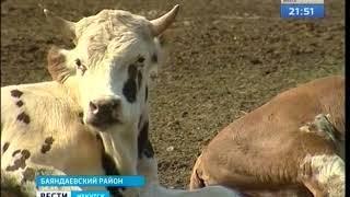 Бесплатное молоко, по стакану в день, планируют выдавать школьникам Иркутской области