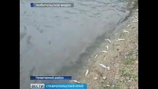 Массовой гибелью рыбы на Ставрополье занялась прокуратура