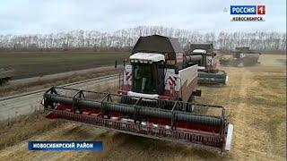 «Вести» узнали, с каким результатом завершили уборочную аграрии в Ярково