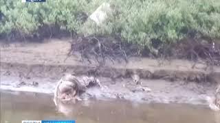 На Таймыре браконьеры массово уничтожают оленей