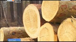 Маркировка древесины снизила объём незаконных рубок леса в Иркутской области