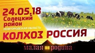 Малая Родина. Колхоз «Россия»