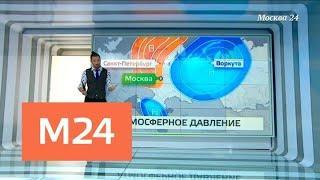 """""""Климат-контроль"""": какая погода ждет москвичей в конце ноября - Москва 24"""