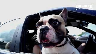 Как избежать ДТП с участием собаки