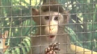 Выставка обезьян открылась в Биробиджане(РИА Биробиджан)