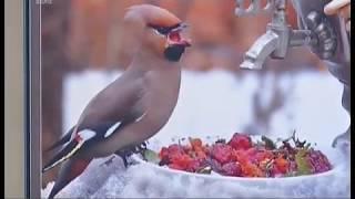 Природа без фотошопа. В Челябинске открылась выставка от National Geographic