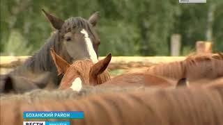 В августе в Иркутской области пройдут скачки на призы губернатора  Как готовятся к соревнованиям уча