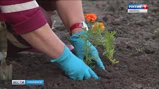 В Смоленске высадят полмиллиона цветов