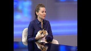 Директор приюта «Краснодог» Наталья Дубницкая: при общении с котами повышается гормон счастья